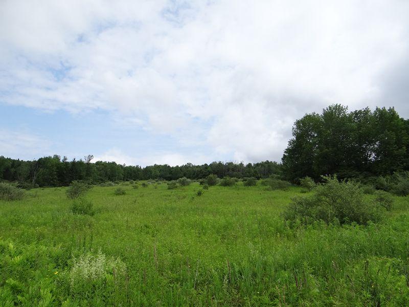 29 Acres Hunting Near State Forest : Smyrna : Chenango County : New York