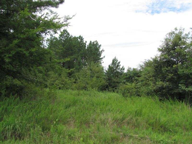200 Acre Of Undeveloped Land : Huntingdon : Carroll County : Tennessee