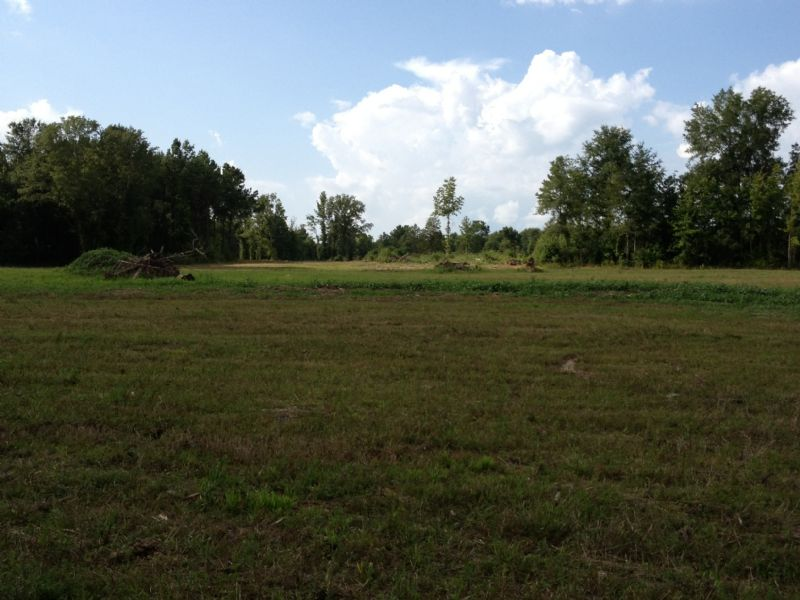 100 Acres Loaded With Deer : Forest : Scott County : Mississippi
