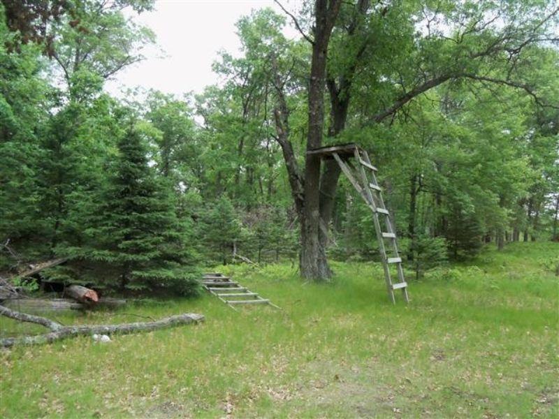 Big Buck Territory - 266 Acres : Friendship : Adams County : Wisconsin