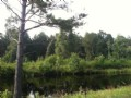 15.588 Acres With Pond