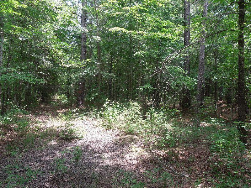 Princess Pond Block 2 : Summerton : Clarendon County : South Carolina