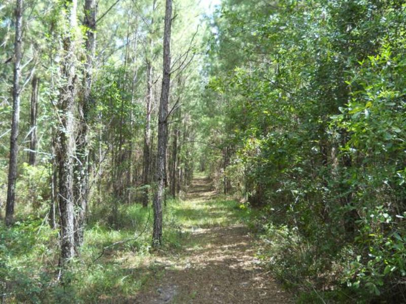 100+ Acres With Some Pasture : Lake City : Columbia County : Florida