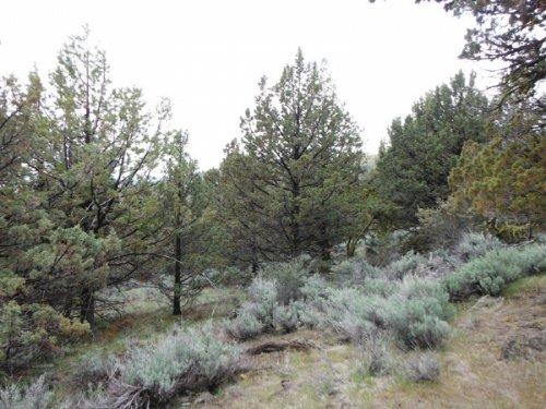 21 Acres Moon Valley Ranch. Terms : Termo : Lassen County : California