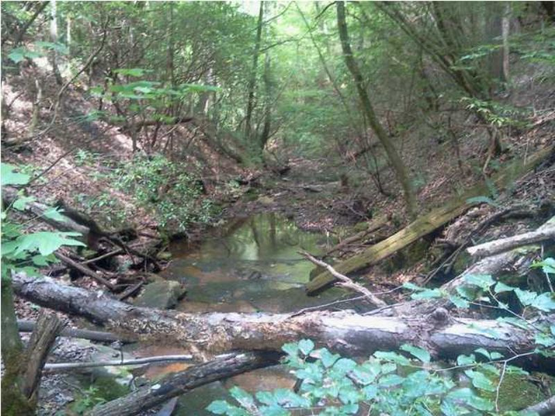 Rural Brow Lot With Stream/creek : South Pittsburg : Marion County : Tennessee