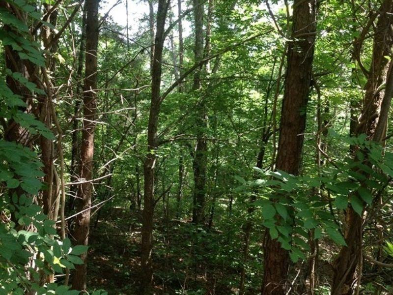 Hurricane Creek Tract : Brookwood : Tuscaloosa County : Alabama