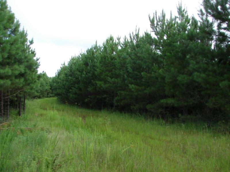South Auburn 305 : Opelika : Lee County : Alabama