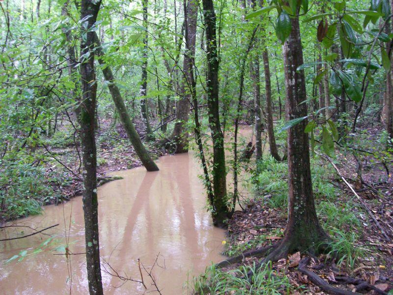 Goose Hollow Timberlands : Sasser : Terrell County : Georgia