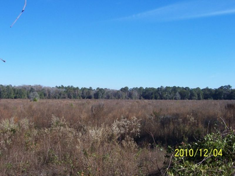 36+/- Ac. Next To State Owned Land : Jasper : Hamilton County : Florida