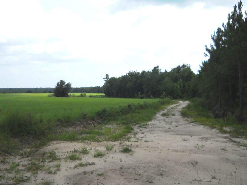 149 Acres With Some Pasture : Jasper : Hamilton County : Florida