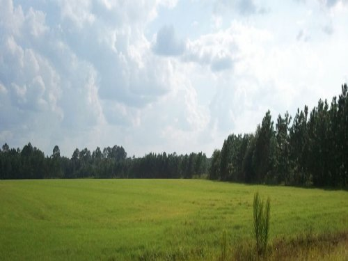 36 Acres Producing Pasture & Pines : Odum : Wayne County : Georgia