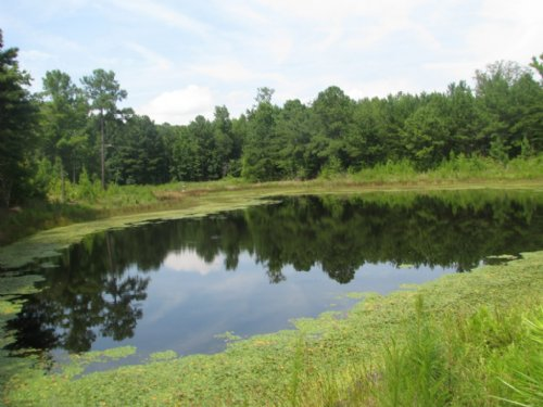 24 acre farm for sale by edgemoor in york county south for Big fish ponds for sale