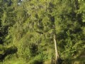 Flint River Woods : Albany : Dougherty County : Georgia