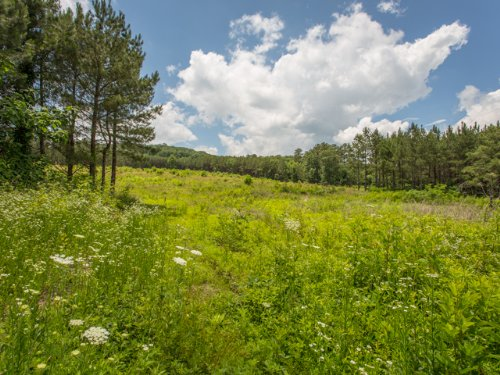 Wf: 10+ Acres Perfect For Horses : Signal Mountain : Sequatchie County : Tennessee