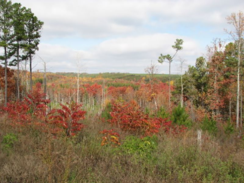Signal: Private Mini Farm Retreat : Signal Mountain : Sequatchie County : Tennessee