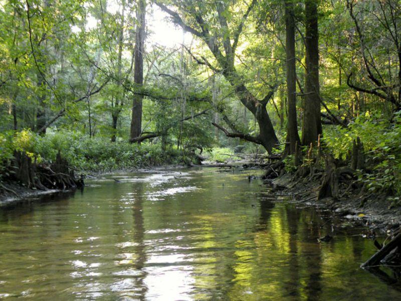 New Drayton Farm : Cordele : Crisp County : Georgia