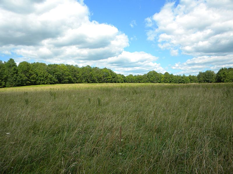66 Acres Farmland Mineral Rights : Willet : Cortland County : New York
