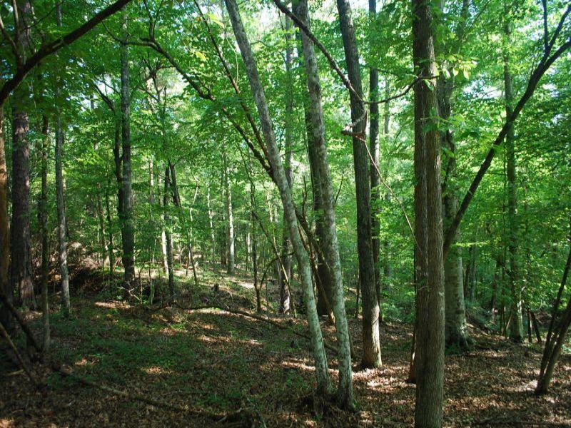 39 Acre Recreational Tract Near Bro : Union : Union County : South Carolina