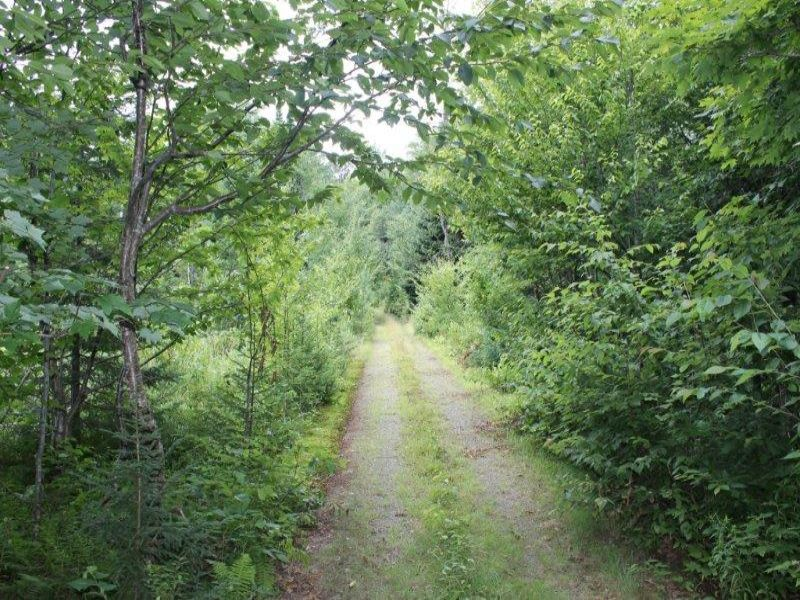 15 Acres Hunting Land Woods Trails : Lewis : Lewis County : New York