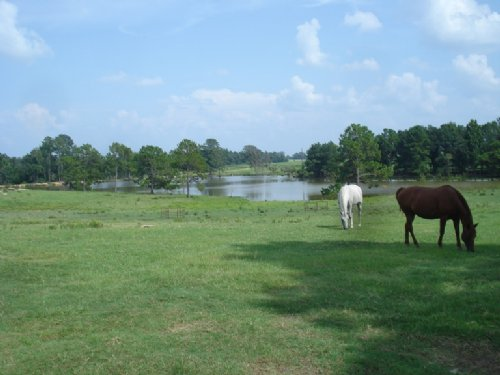 Cattle Farm- Price Reduced : Abbeville : Wilcox County : Georgia