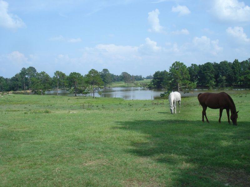 Cattle Farm- Price Reduced : Abbeville : Wilcox County : Georgia