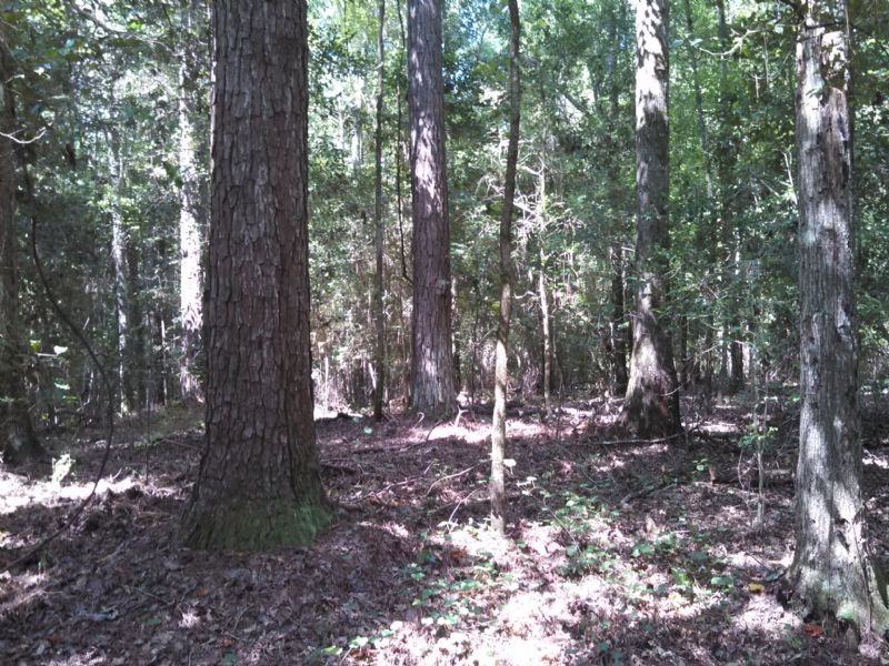 134 Acre Timber And Hunting Tract : Ellaville : Schley County : Georgia