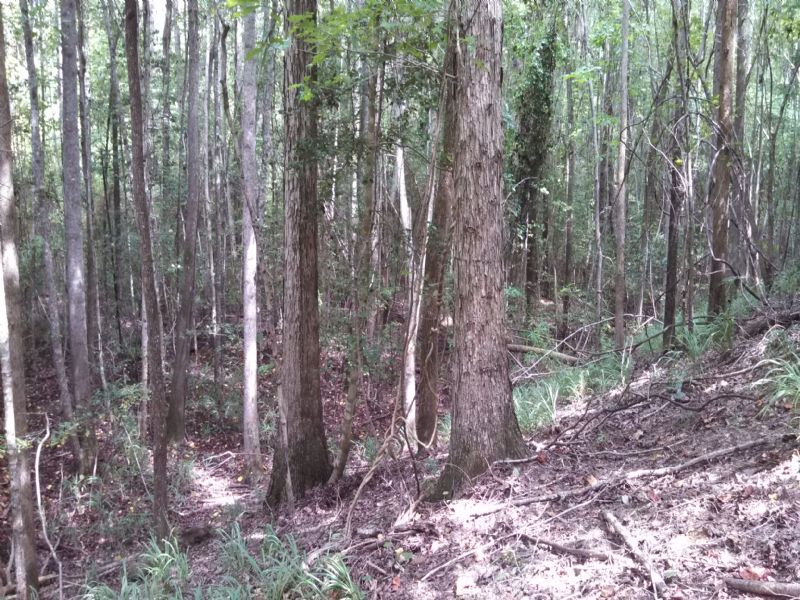280 Acre Hunting And Timber Tract : Ellaville : Schley County : Georgia