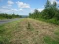 31+ Acres Building Lot Hunting Land