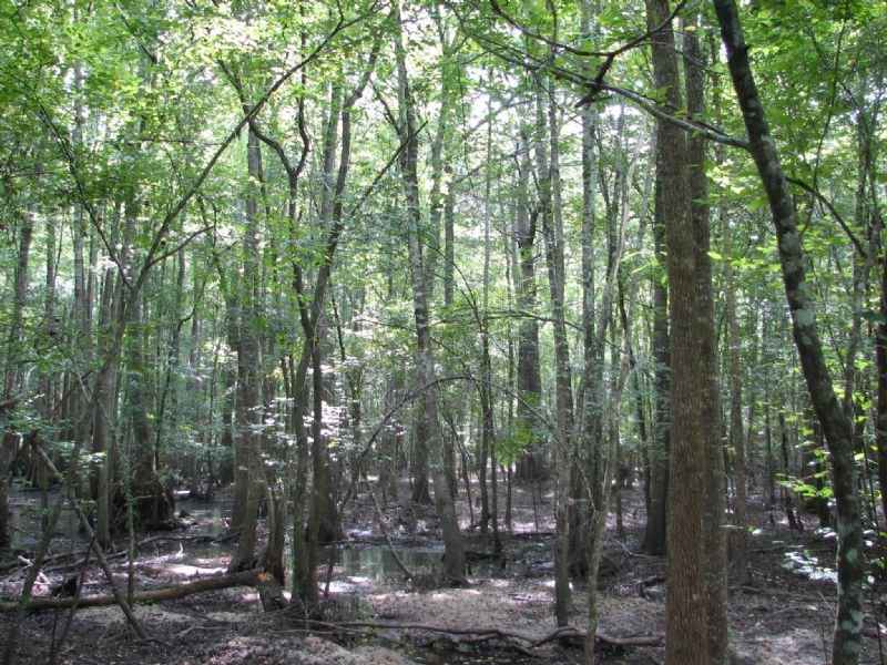 Income Producing River Tract : Guyton : Effingham County : Georgia