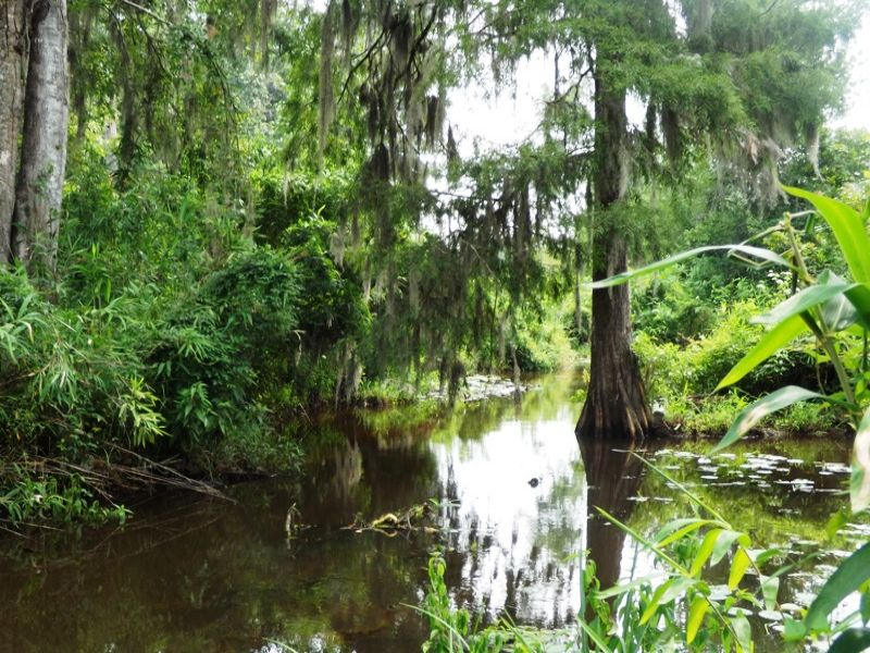 Brier Creek Tract : Sardis : Burke County : Georgia