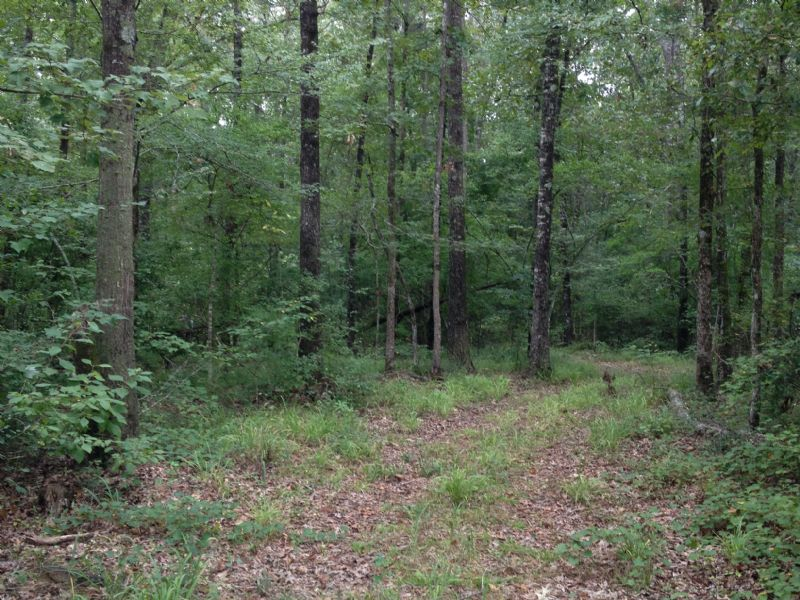 280 Acre Turn Key Hunting Tract : Carthage : Leake County : Mississippi