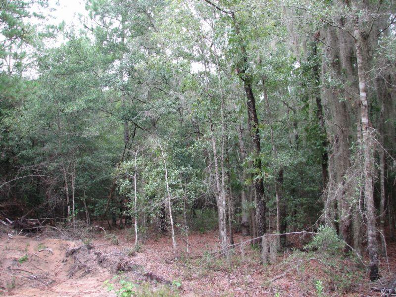 Woods River Tract #2 : Guyton : Effingham County : Georgia