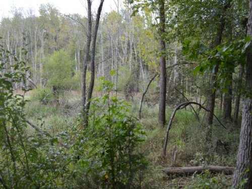 74 Hunting Acres Near Whitestone : Spartanburg : South Carolina