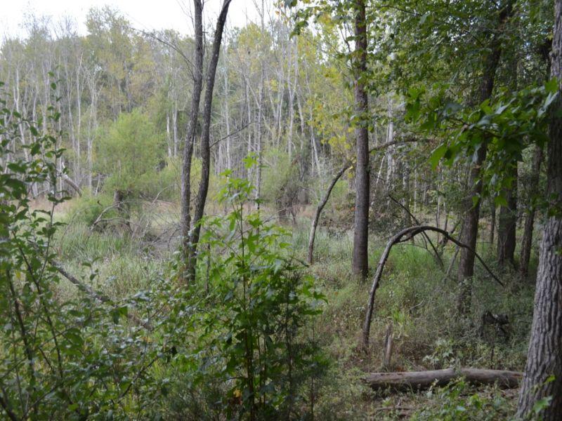 74 Hunting Acres Near Whitestone : Spartanburg : Spartanburg County : South Carolina