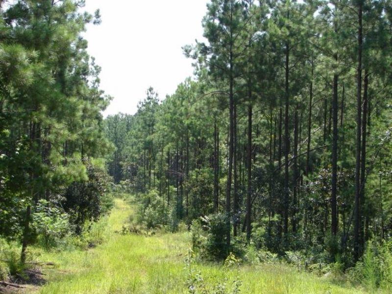 Frisco 138 : Vredenburgh : Monroe County : Alabama