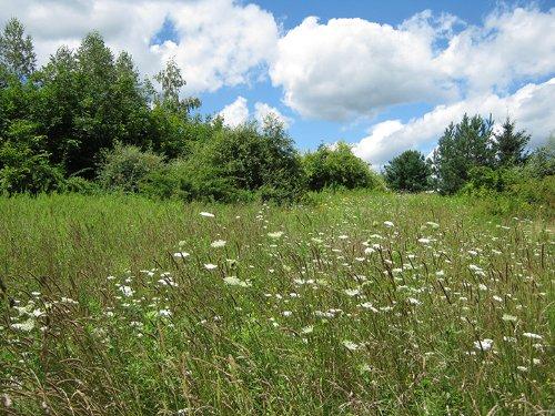 8 Acres Open Fields And Woods : Hector : Schuyler County : New York