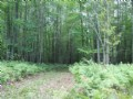Awesome Hunting Property in Alcona County, Michigan