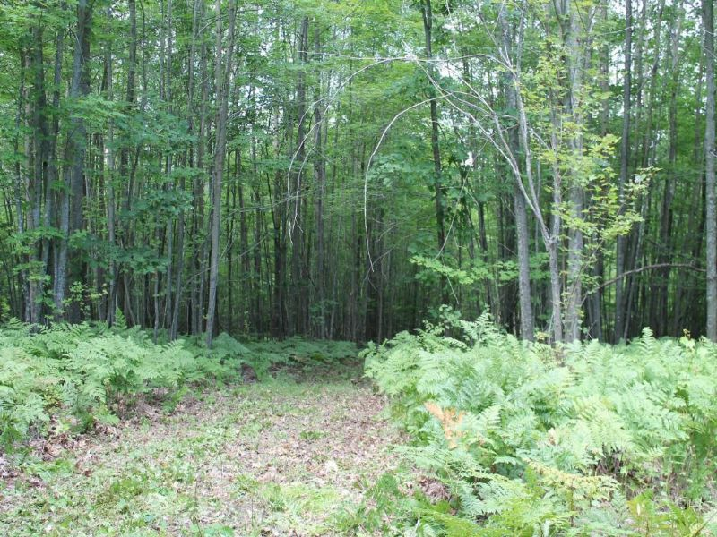 Awesome Hunting Property : Lincoln : Alcona County : Michigan