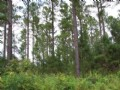 Wooded 22.95 Acres Tracts 4-6