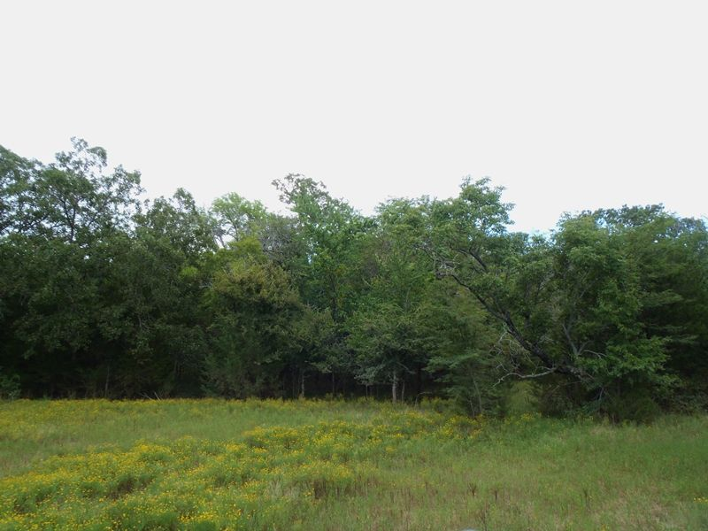 Hampton Creek 40 : Antlers : Pushmataha County : Oklahoma