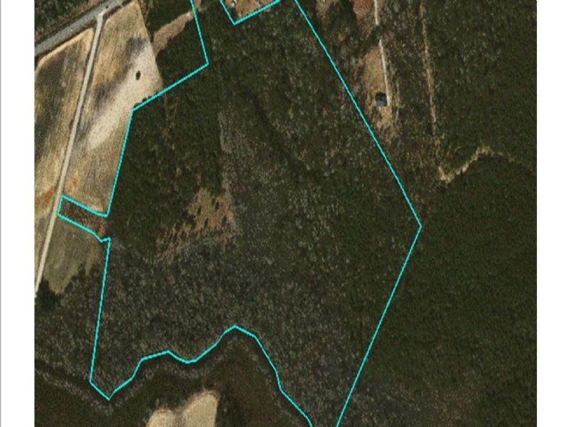 54+ Acre Tree Farm : Conway : Horry County : South Carolina