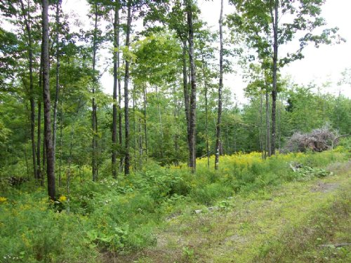 Private Pond On 20 Acres : Saint Albans : Somerset County : Maine