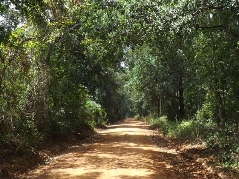 Pretty Timber, Bunkhouse : Shellman : Randolph County : Georgia