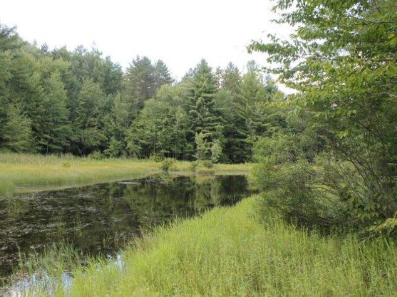 10 Acres Borders State Forest Pond : Annsville : Oneida County : New York
