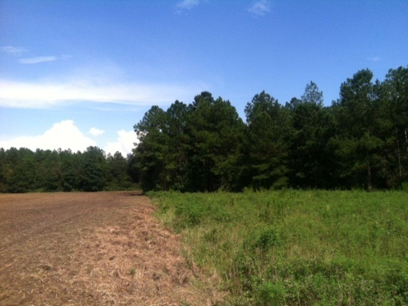 Row Crop + Timber : Abbeville : Wilcox County : Georgia