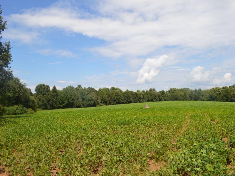 41.62 Acre Farm Near Cowpens Nation : Cowpens : Cherokee County : South Carolina