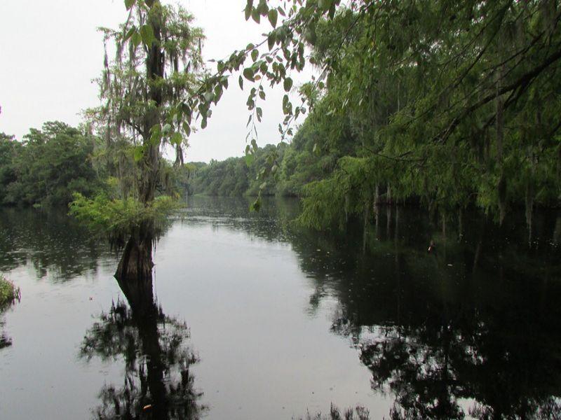 Cartwheel Landing Tract : Conway : Marion County : South Carolina