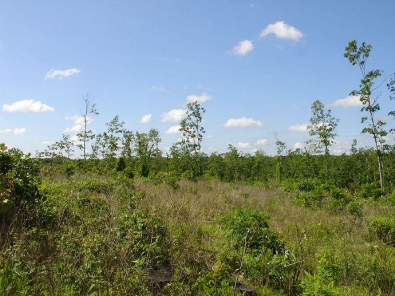 27.57 Acres Antler Ridge. Terms : Salem : Shannon County : Missouri