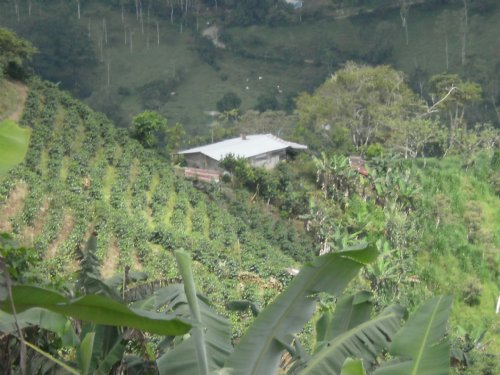 Working Farm, 168 Ac. Sugar Cane : La Suiza De Turrialba : Costa Rica