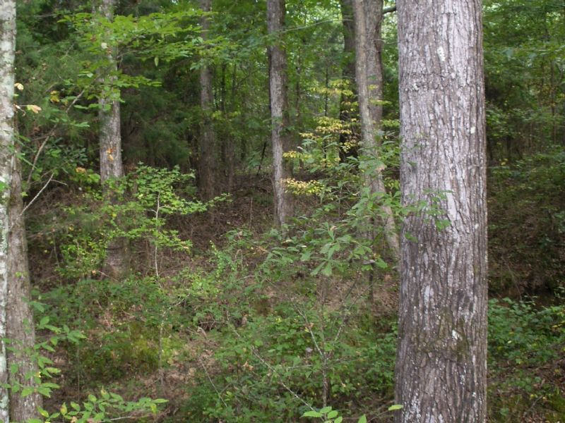 300 Acres : Columbus : Lowndes County : Mississippi